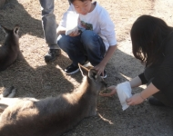 Kangaroo Feeding at Symbio